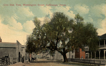 Live Oak Tree on South Washington Street, La Grange